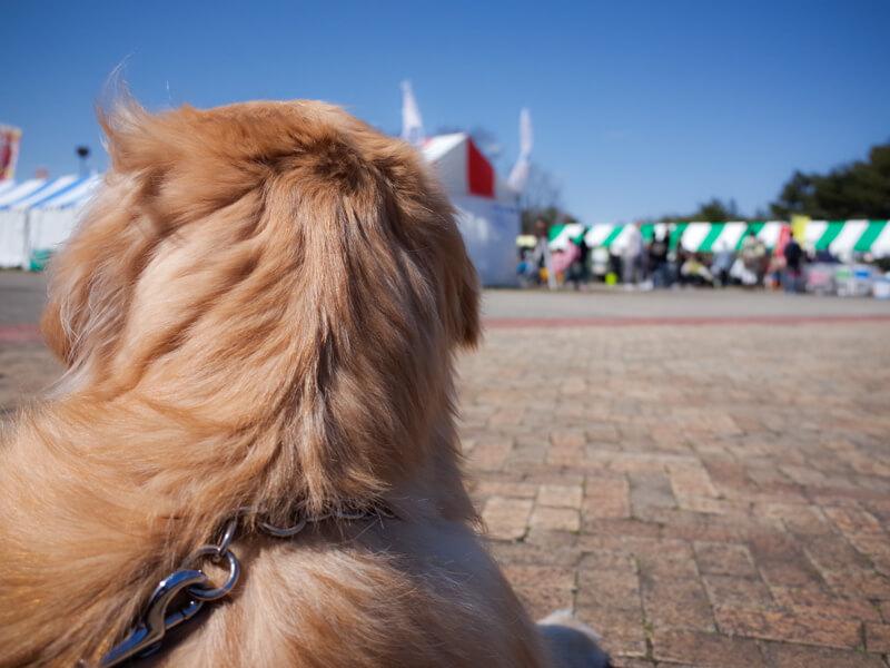 国営ひたち海浜公園と犬