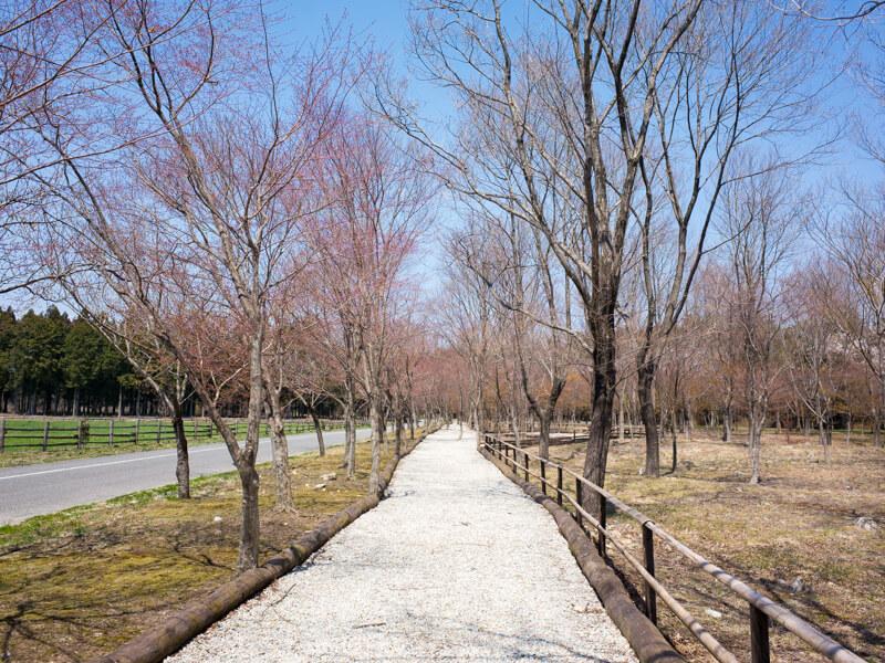 那須千本松牧場の遊歩道