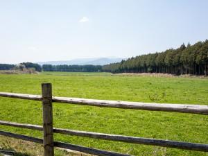 那須千本松牧場の放牧地