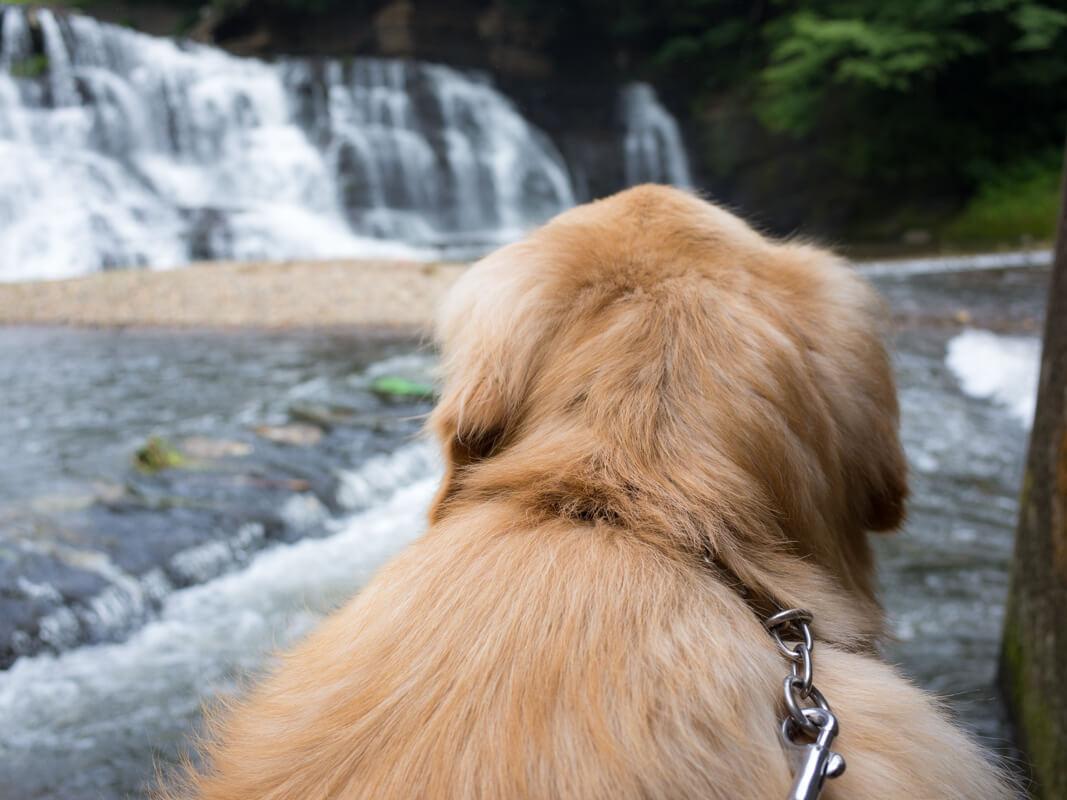 龍門の滝と犬