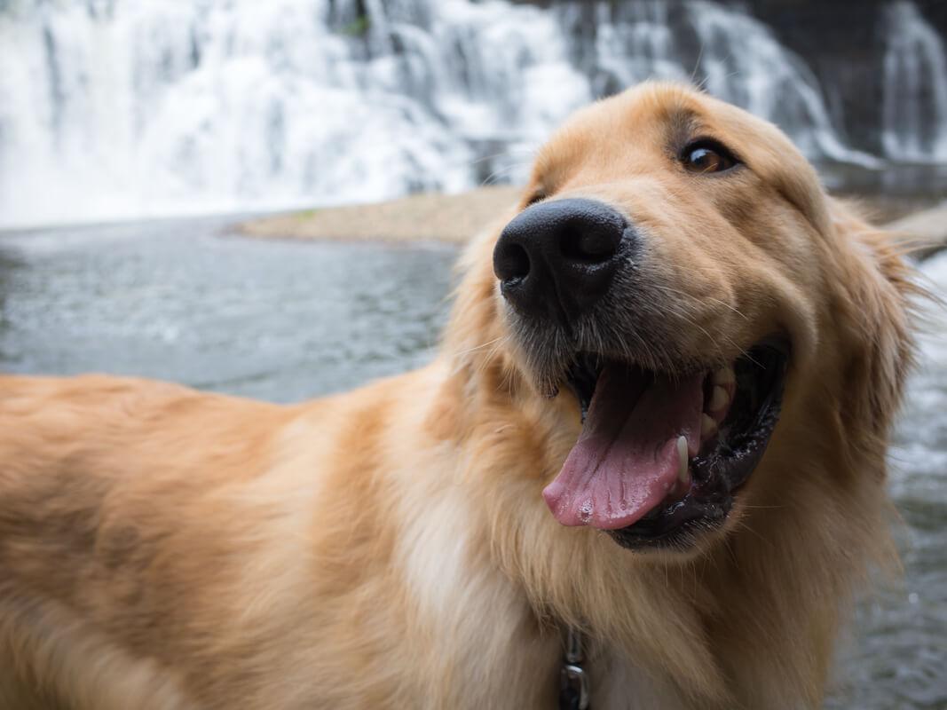 那須烏山市にある瀑布「龍門の滝」に行ってきた