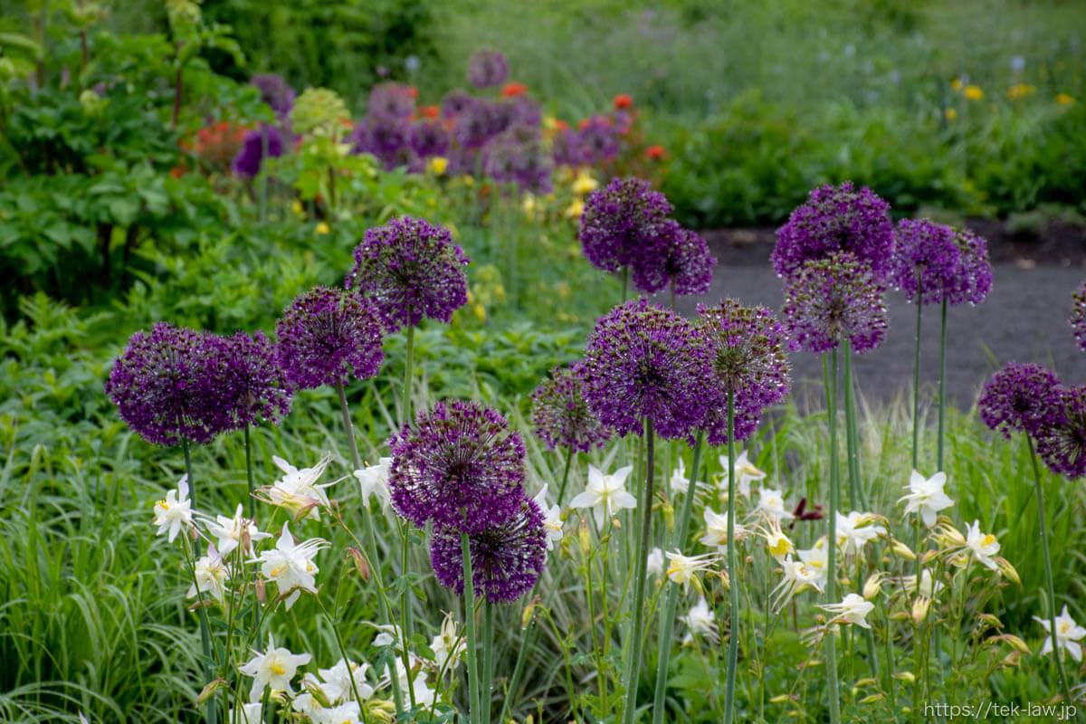 上野ファーム・ガーデンの花々