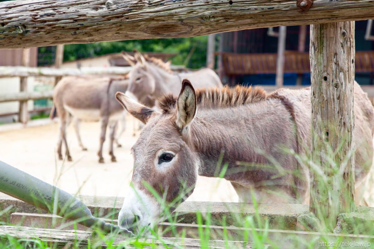 南ヶ丘牧場の馬
