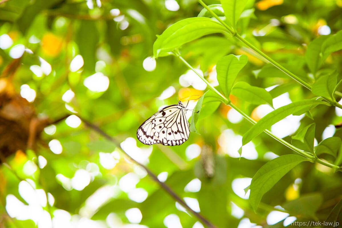 熱帯生態館の蝶